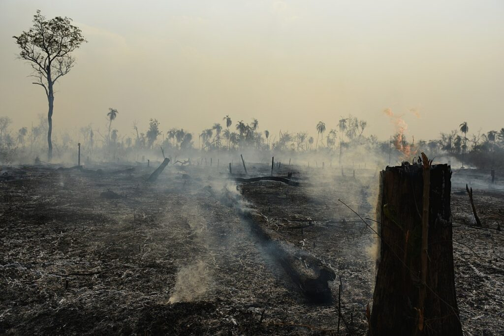 The aftermath of a fire in the Amazon rainforest