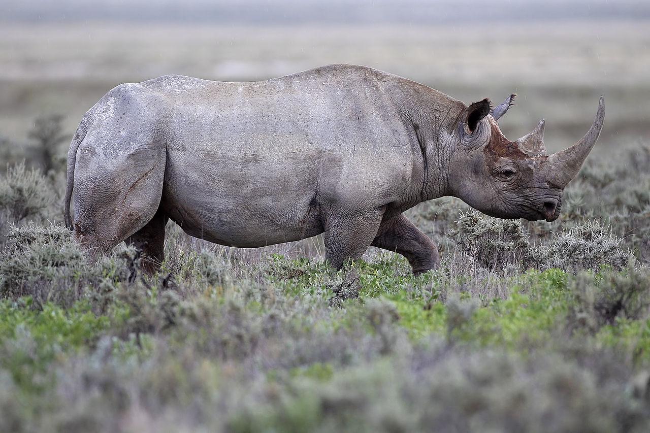 The War on Rhino Poaching