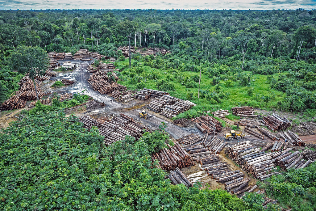The pandemic has provided cover for illegal activities such as rampant deforestation in the Amazon