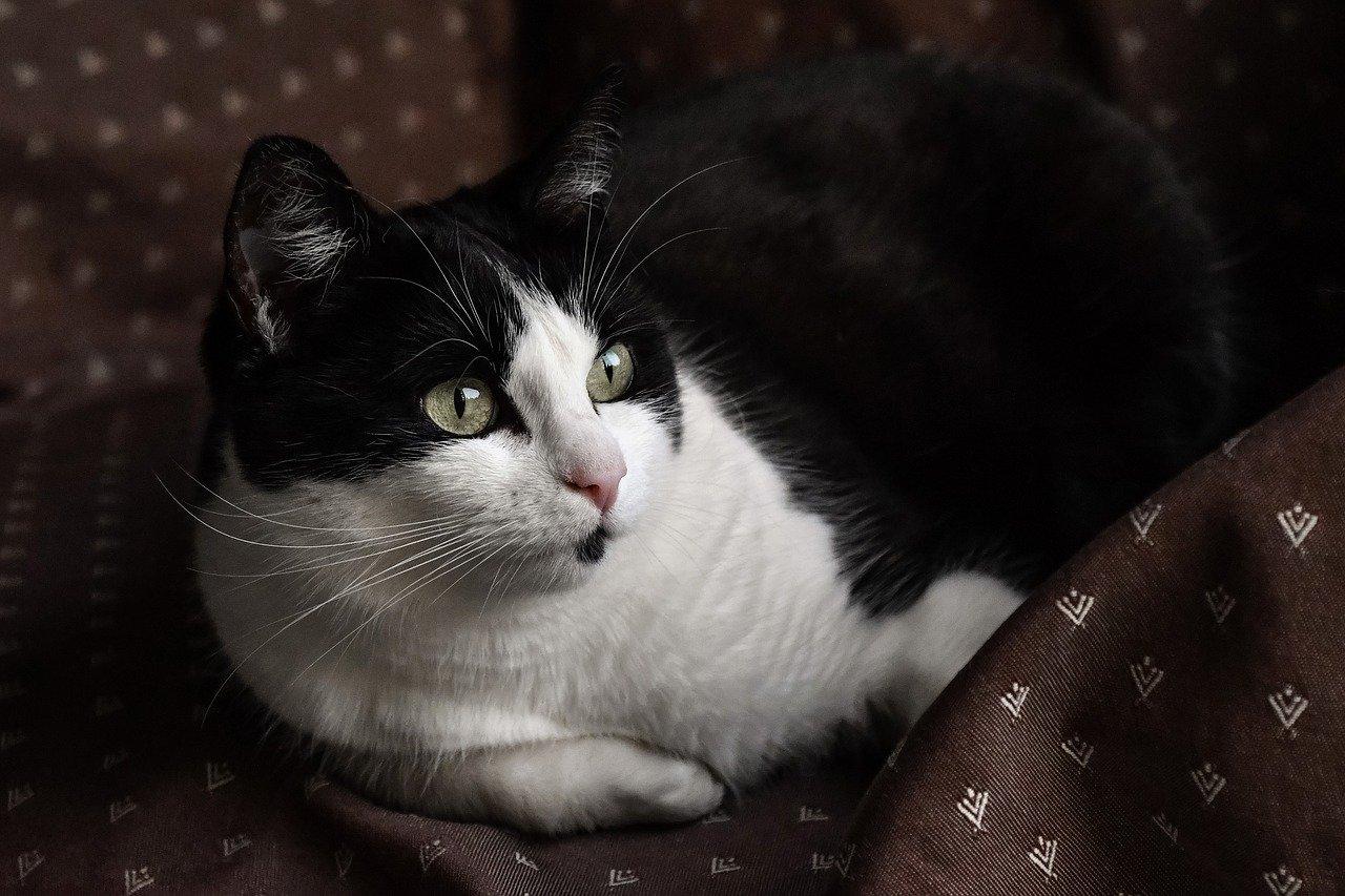 cat, pussy, elongate