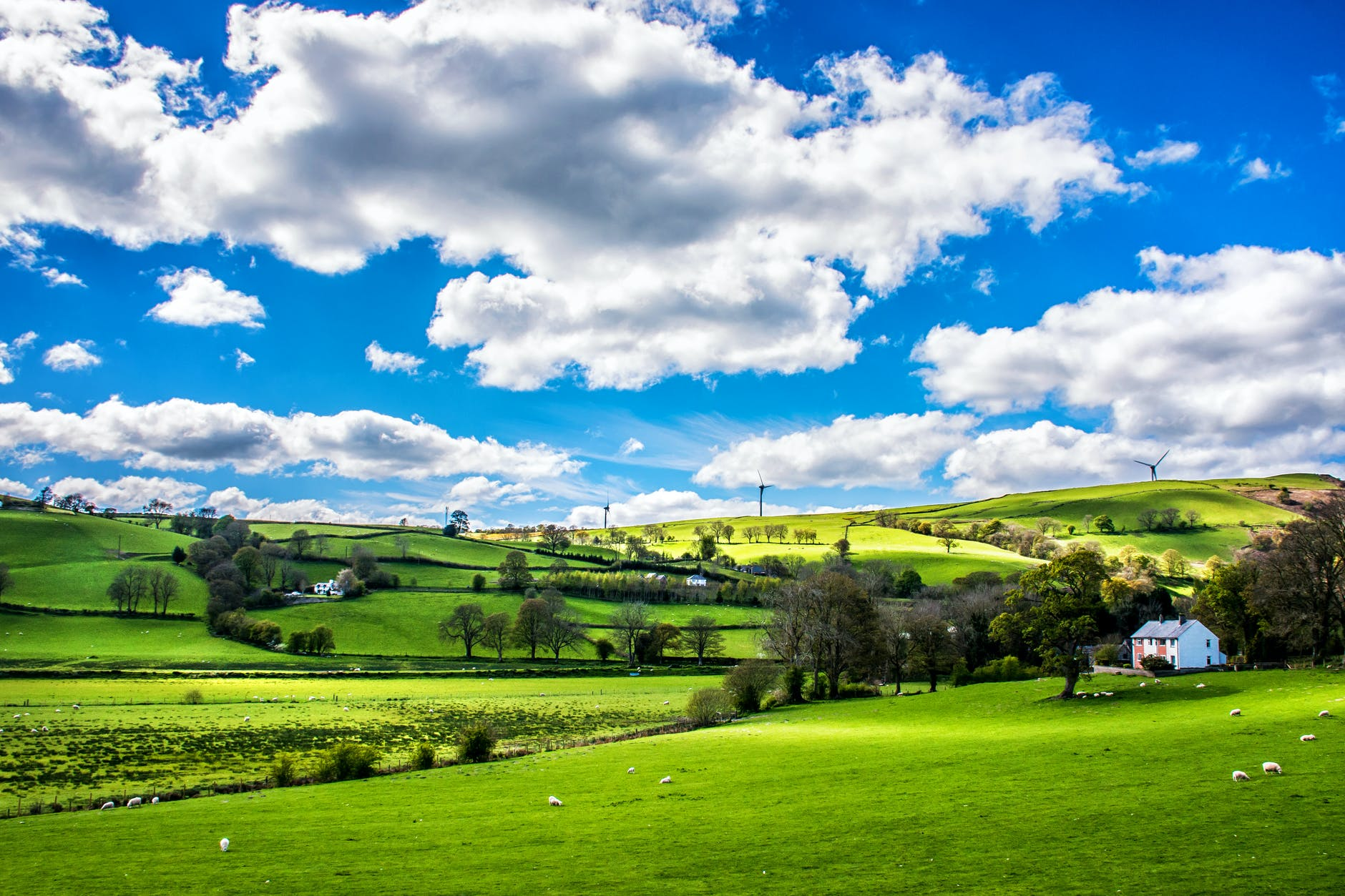 green leafed trees under blue sky in the countryside