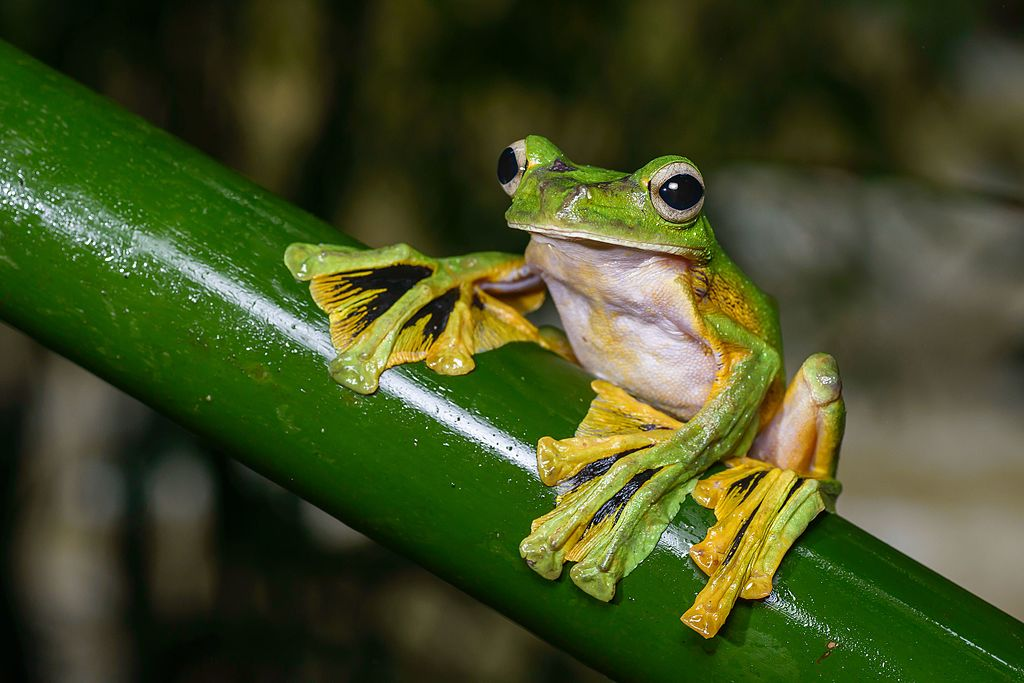Five Fantastically Freaky Frogs