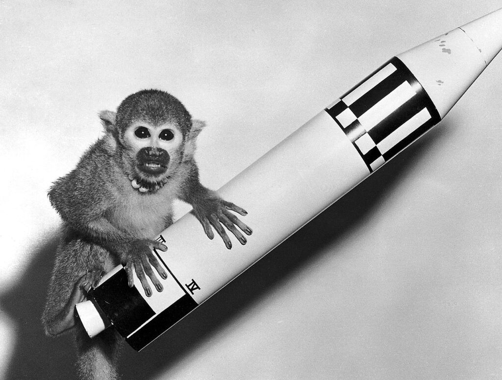 Miss Baker the squirrel monkey pictured next to a model of the rocket she rode into space