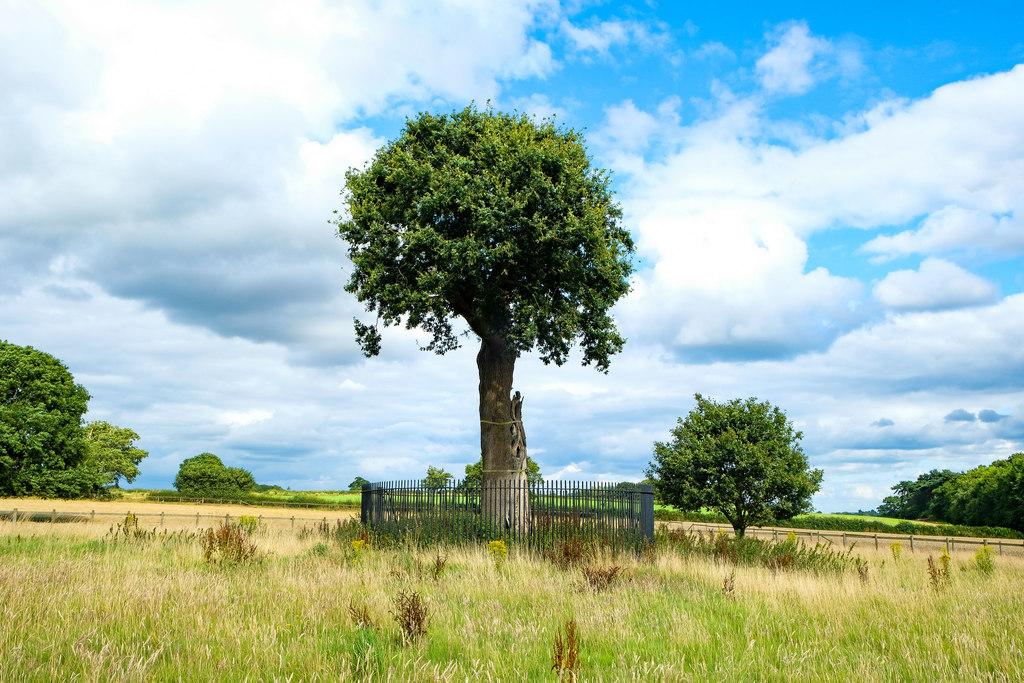 Son of Royal Oak