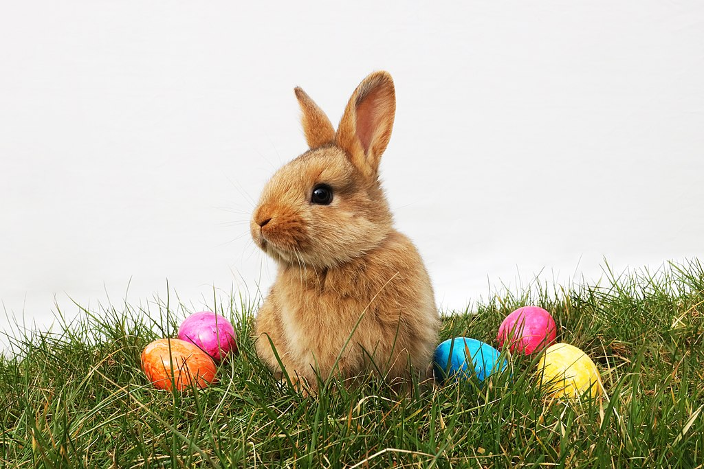 A rabbit surrounded by easter eggs