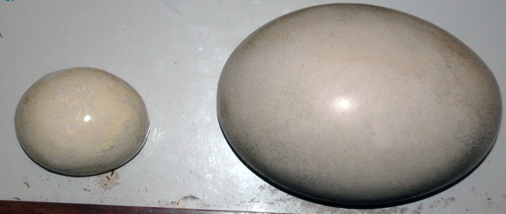 A model of an ostrich egg next to a model of an elephant bird egg, which is the biggest egg laid by any animal in the history of the world