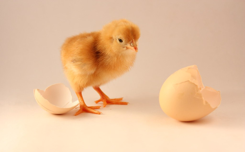 The Wonder of Eggs