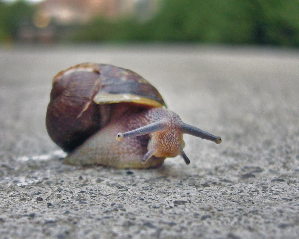 A snail