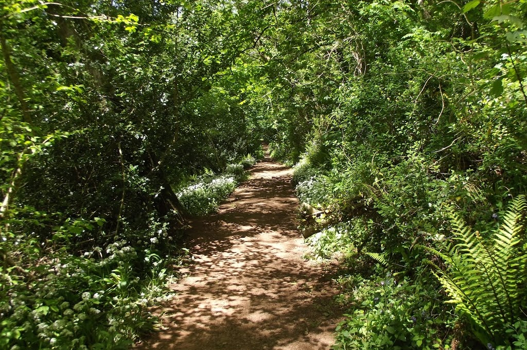 Occombe Woods